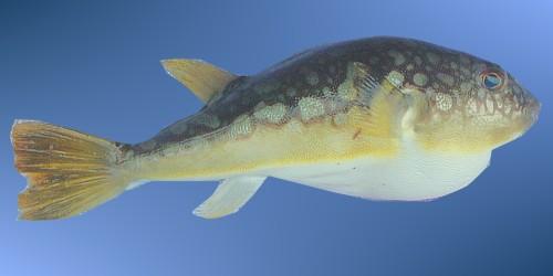 的小鱼叫什么名字?