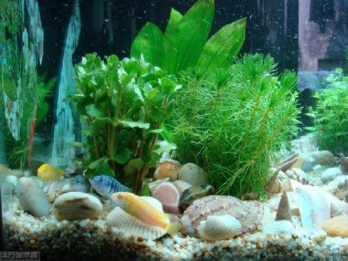壁纸 海底 海底世界 海洋馆 水草 水生植物 水族馆 500_375