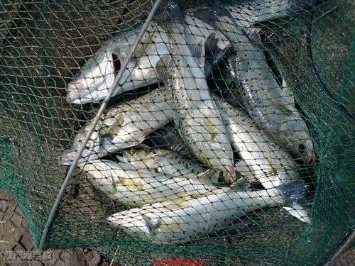 海钓钓友都知道没风,没浪是好难钓到海鱼的,没风,没浪鱼儿就不爱动,不