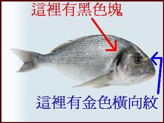 金龙鱼一条多少钱?